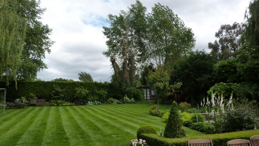 Lawn with trees and shrubs